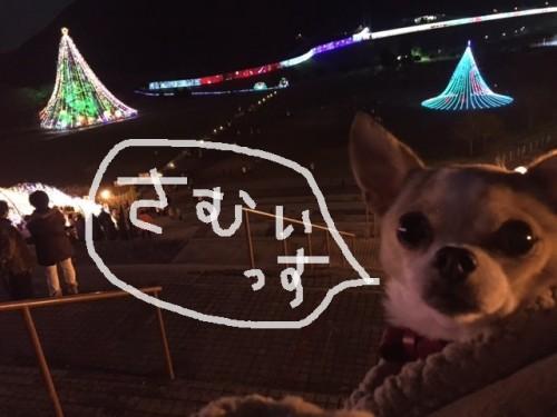 momiji miyagase